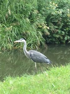 Photo on the Froghall Canal by Teresa Oakes